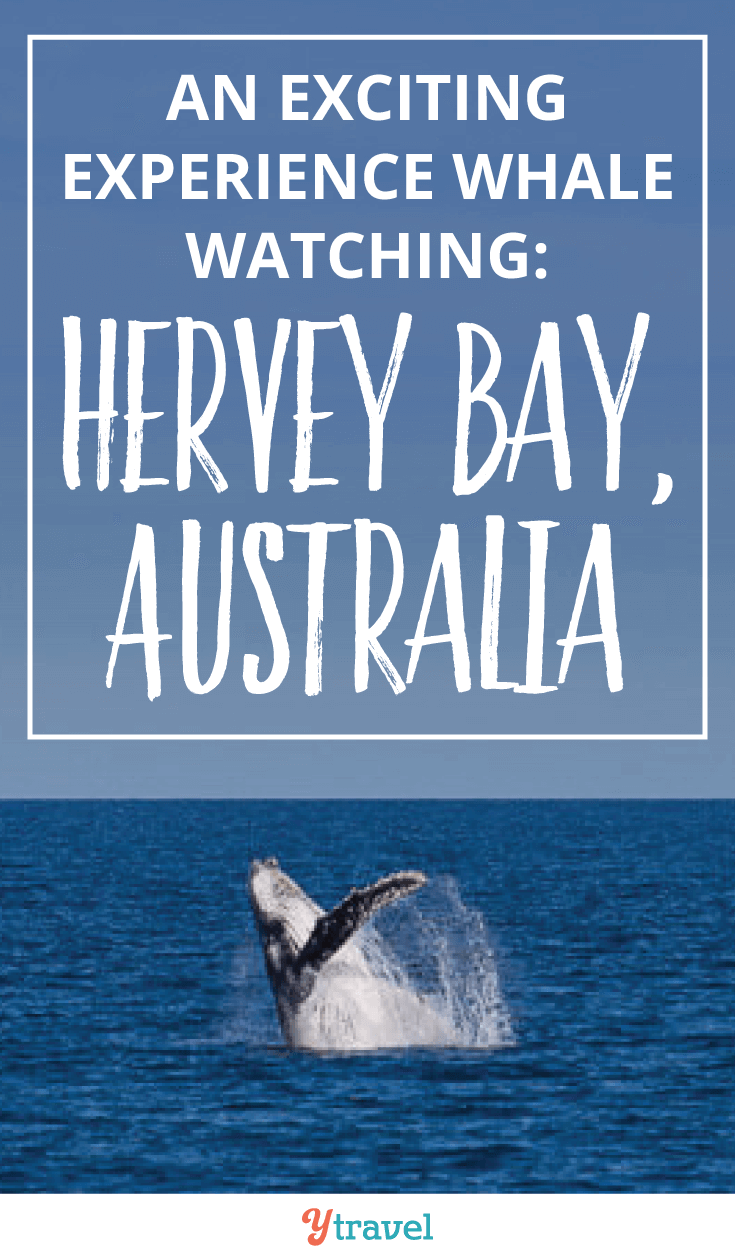 An exciting experience Whale watching at Hervey Bay, Australia.