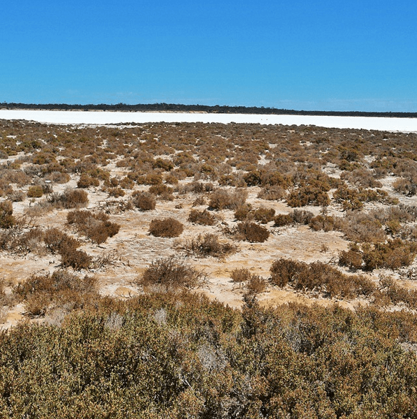 Salt Lake between Coober Pedy & Streaky Bay