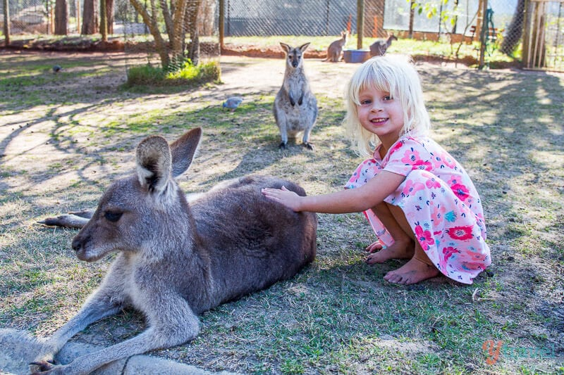 Meeting kangaroos in Port Macquarie, NSW, Australia