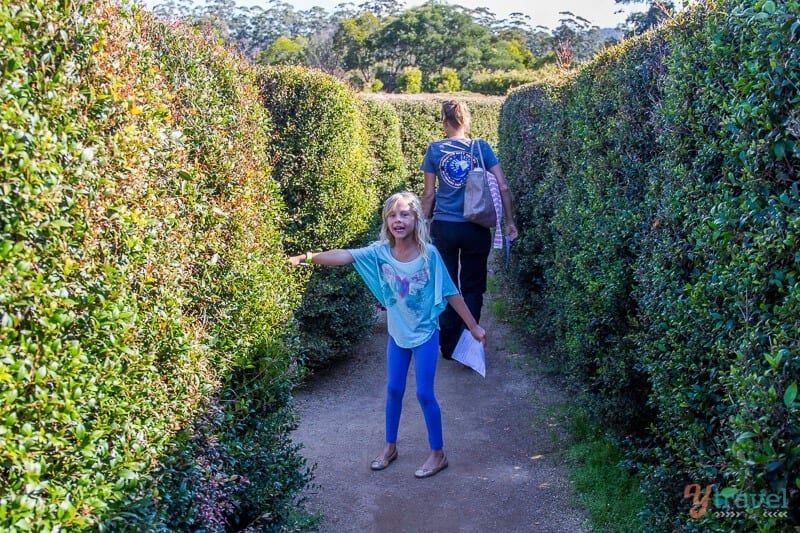 Bago Maze, Port Macquarie, NSW, Australia