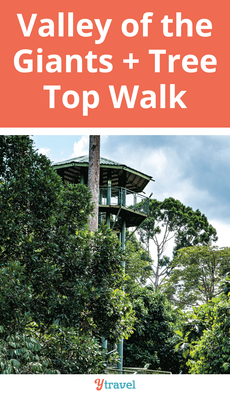 If you find yourself in Australia's South West, a visit to the Valley of the Giants and the Tree Top Walk is a must.