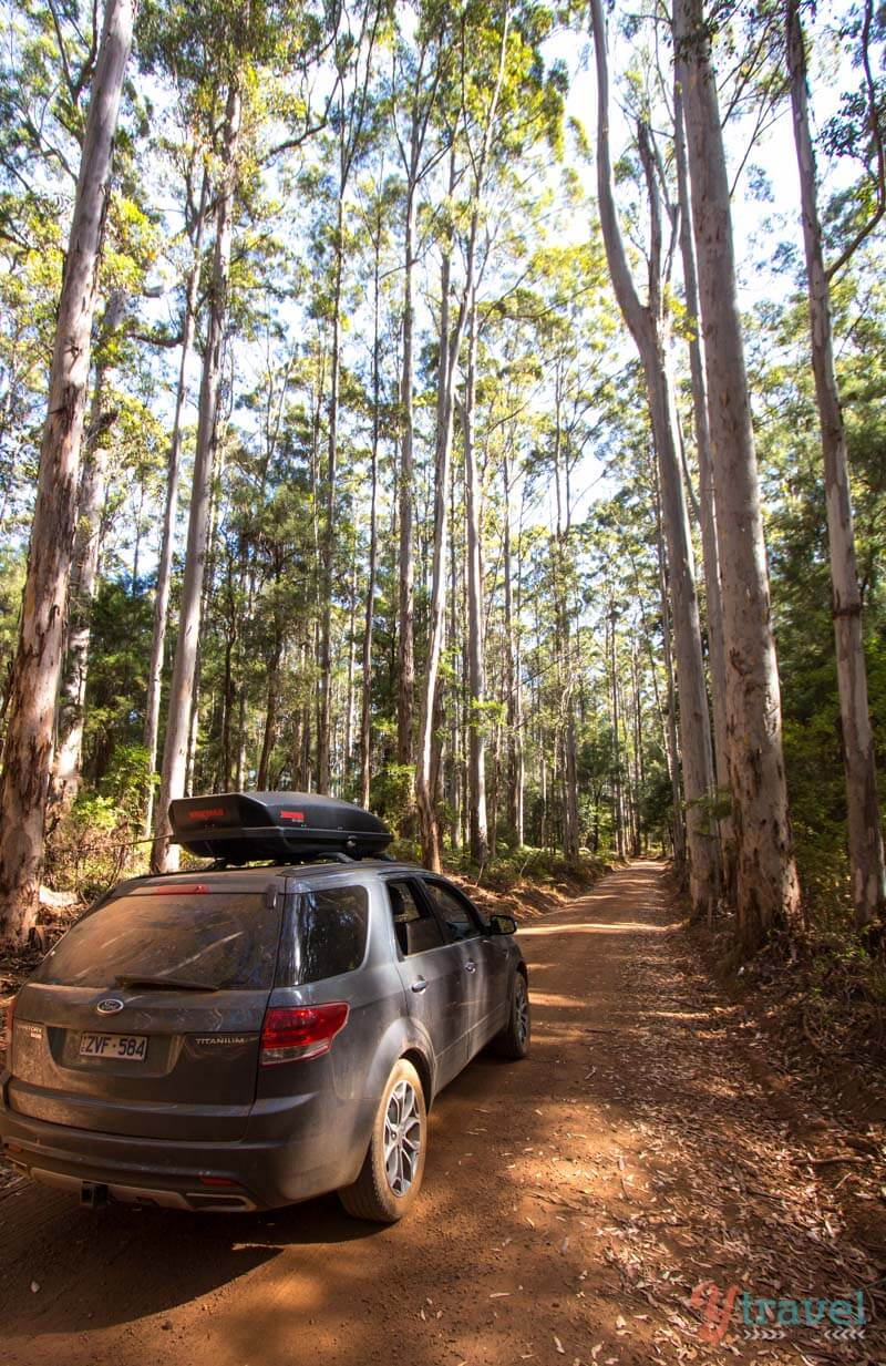 Pemberton, Western Australia