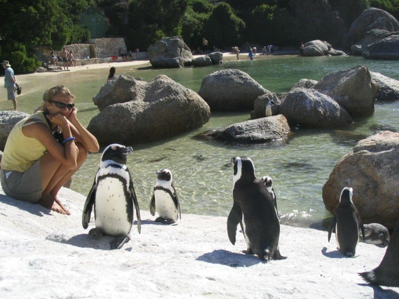 Simons towns penguins