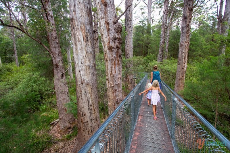 Tree Top Walk in the Valley of the Giants one of the best short walks in Australia