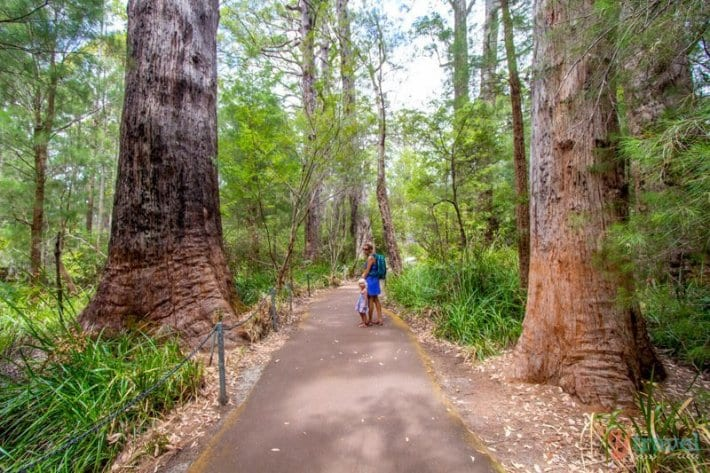 Valley of the Giants, Western Australia