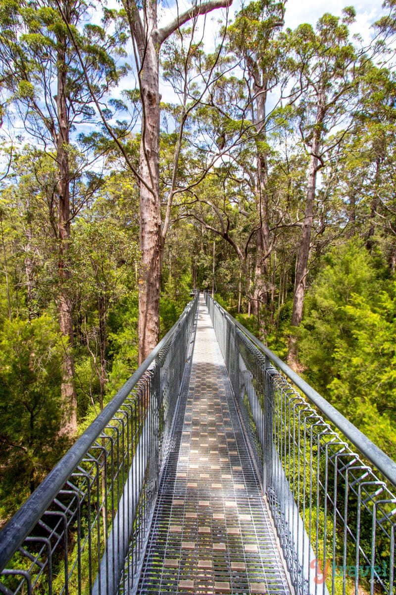 Tree Top Walk in the Valley of the Giants, Western Australia
