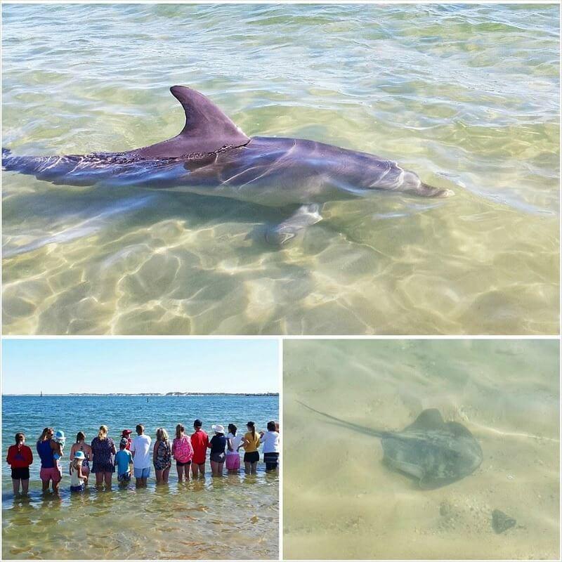 Dolphins in Bunbury, Western Australia