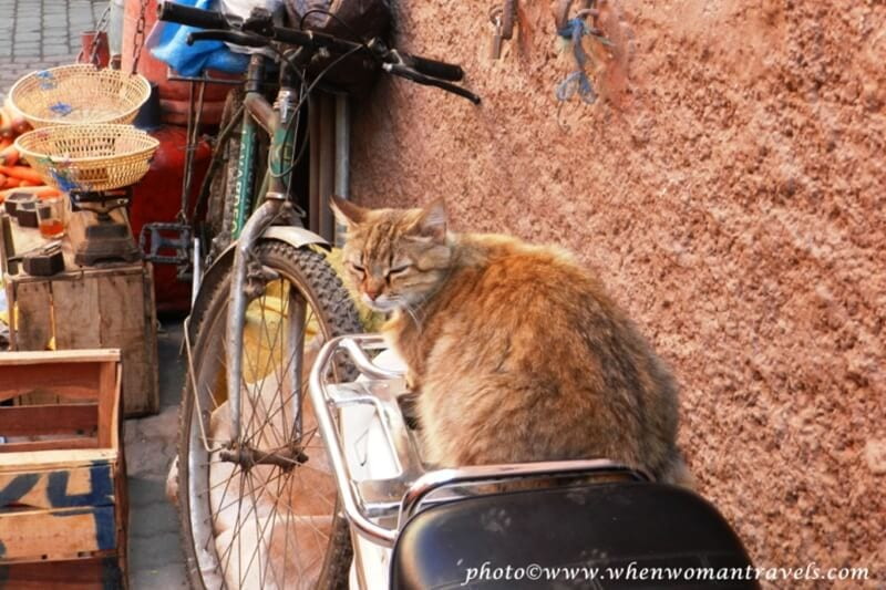 13-Cats ▷ Comenta 23 hermosas razones para visitar Marruecos por nassim ga