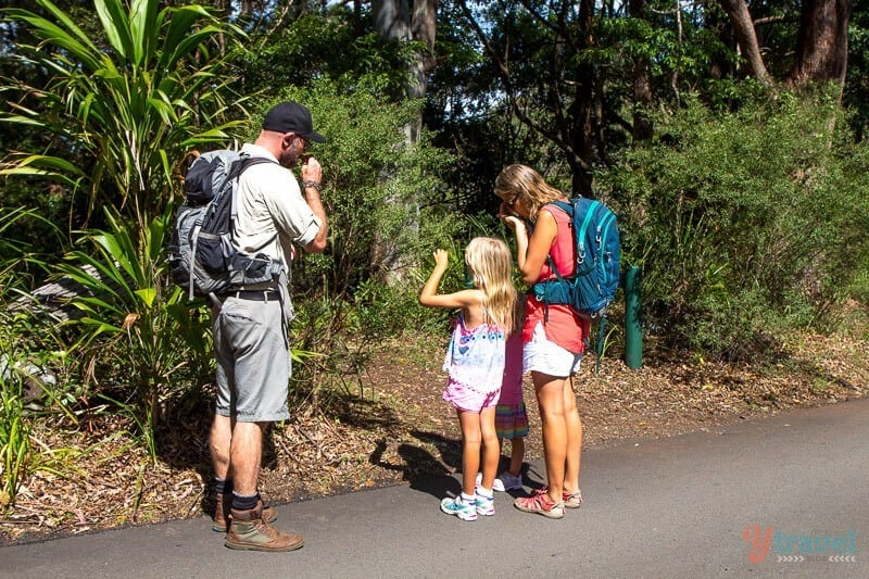 Exploring Binna Burra Mountains in the Gold Coast Hinterland with Ranger Dean