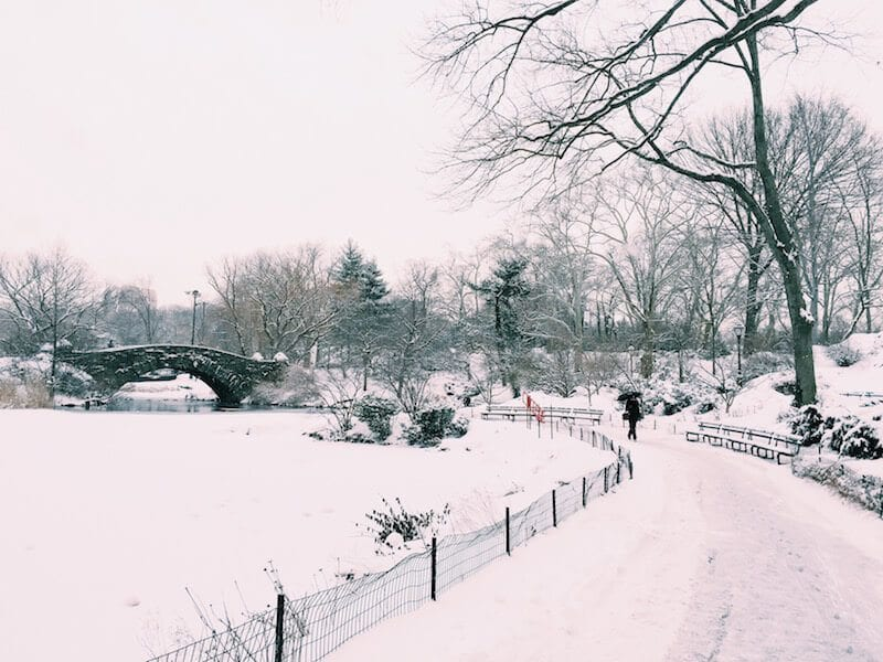 Explore Central Park - One of the best Free things to do in NYC. More tips on the blog!