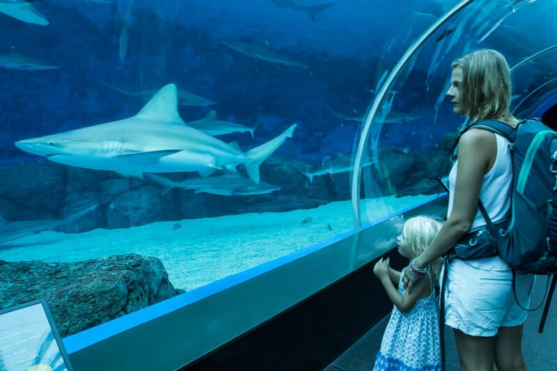 S.E.A. Aquarium - one of the best things to do in Singapore with kids!