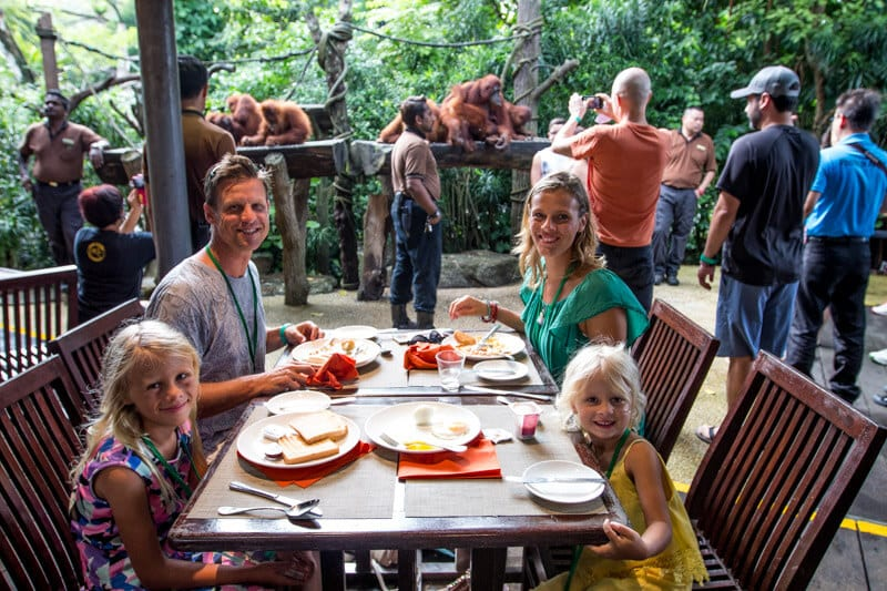 Breakfast with the Orangutans at Singapore Zoo - S.E.A aquarium in Singapore - one of the best things to do in Singapore with kids!