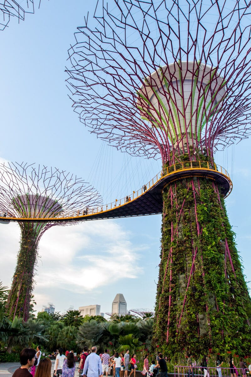 Supertree Grove at Gardens by the Bay - one of the best things to do in Singapore with kids!