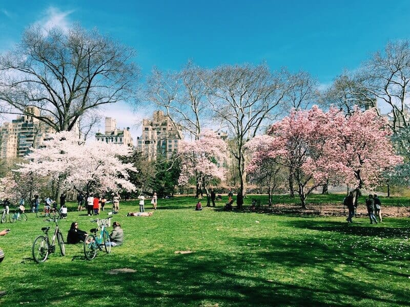 See the cherry trees blossom - things to do in Central Park, New York City