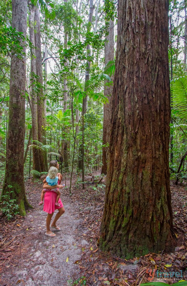 Rainforest on Fraser Island, Queensland, Australia