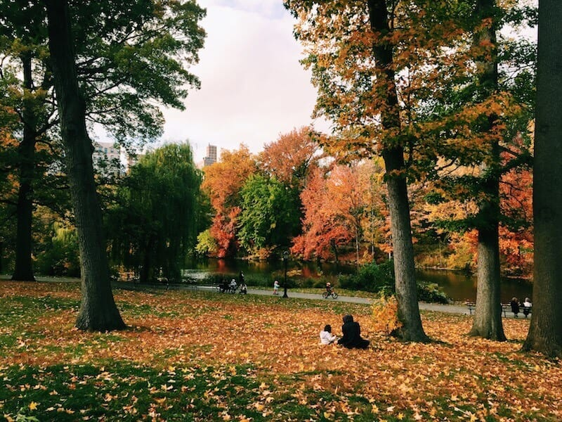 See the leaves change on The Pool - things to do in Central Park, New York City