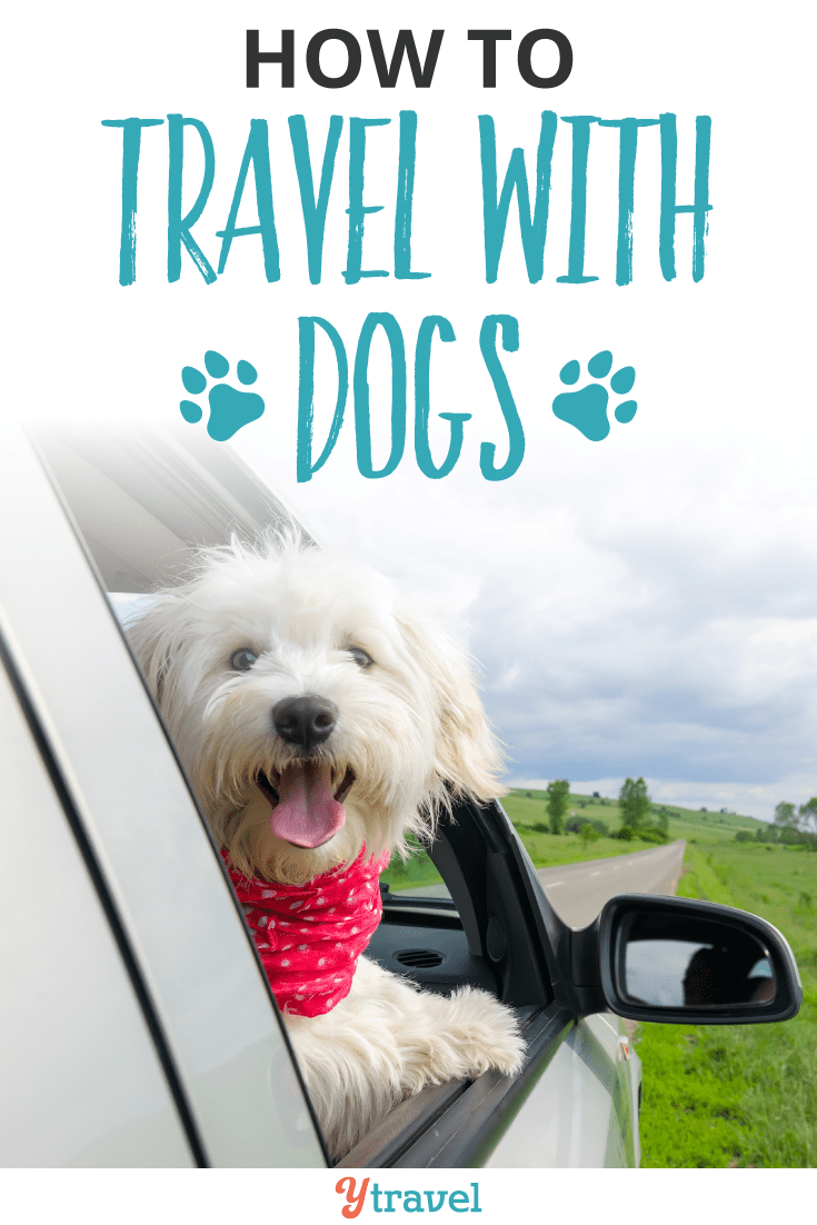 How to travel with dogs.
