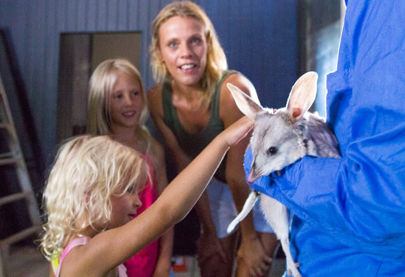Bilby experience in Charleville