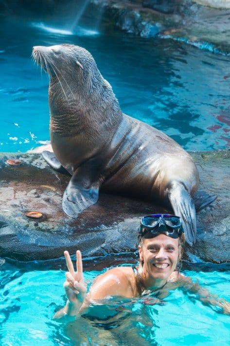 Sea life swim with seals
