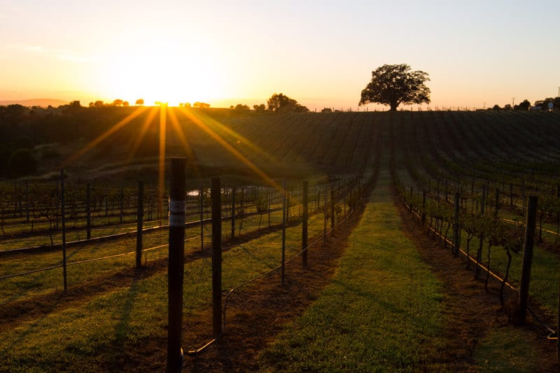 Sunrise at Woodlands of Marburg - things to do in Ipswich, Queensland