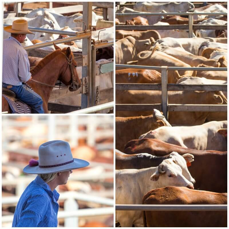 Roma Saleyards, Outback Queensland