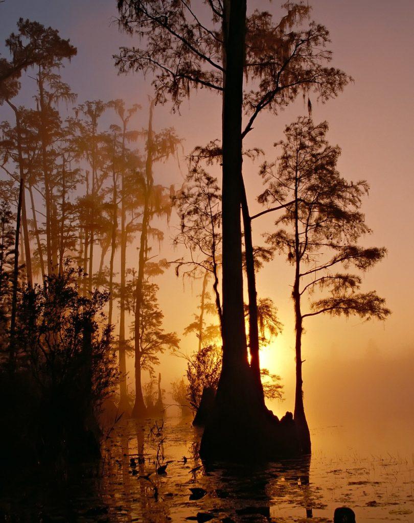 okefenokee swamp florida