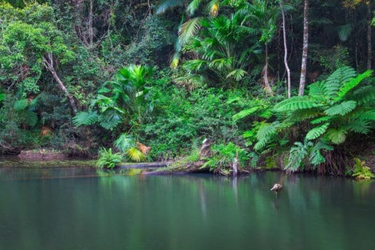 Broken River in Eungella National Park, Queensland, Australia