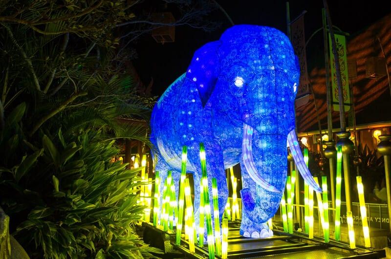Elephant at Taronga Zoo in Sydney during the Vivid Sydney Festival