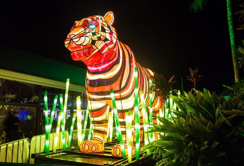 Sumatran Tiger at Taronga Zoo in Sydney during the Vivid Sydney Festival
