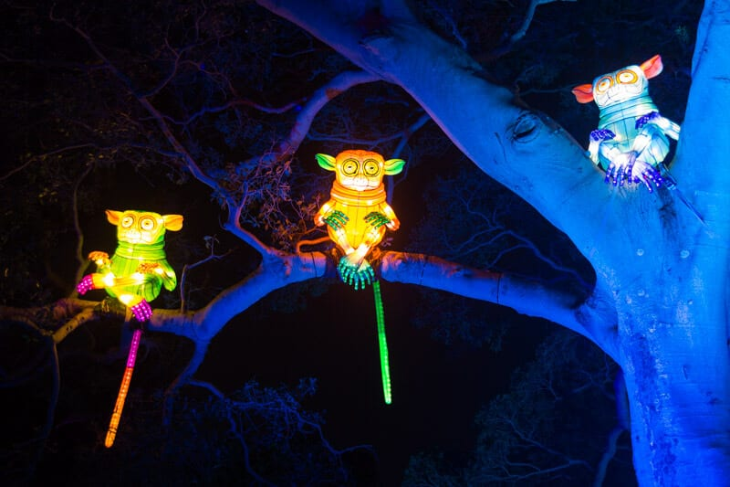 Taronga Zoo in Sydney during the Vivid Sydney Festival