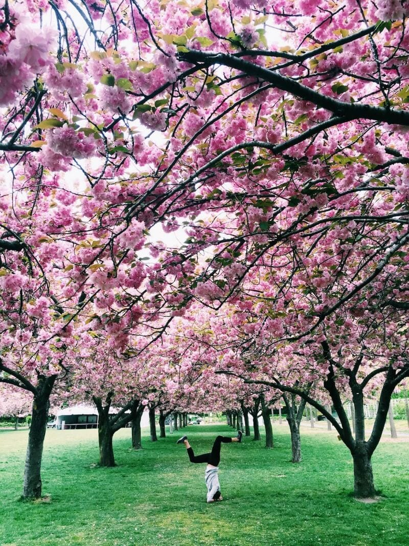 Seven Best Parks In Nyc Travlnwswire