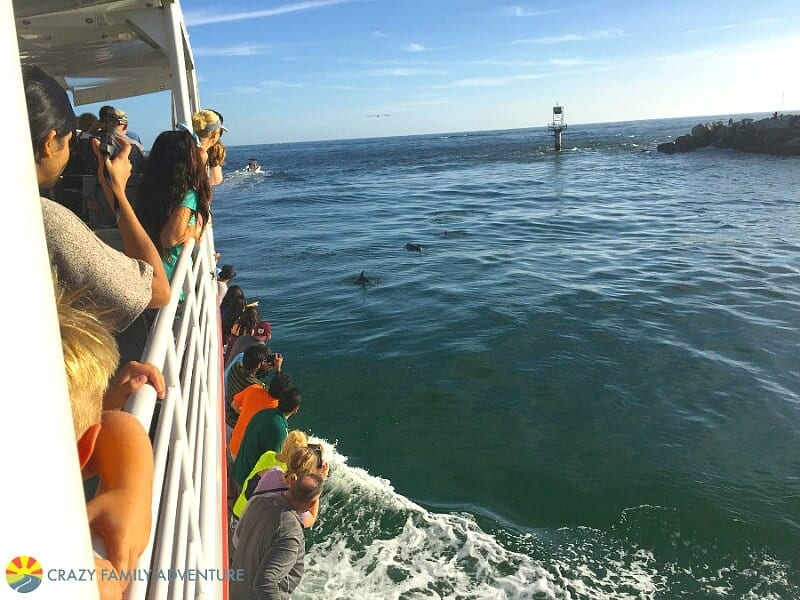 Dolphin cruise - one of the best things to do in Destin, Florida