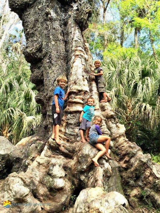 Highland Hammock State Park: l'un des meilleurs endroits à visiter en Floride