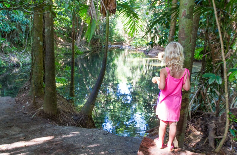 Mason's Swimming hole in the Daintree Rainforest
