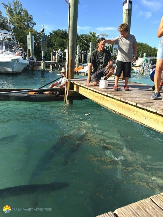 Feed the tarpons at Robbies in the Florida Keys
