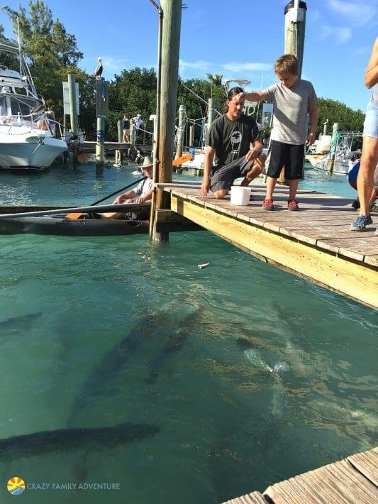 Nourrir les bâches à Robbies dans les Florida Keys