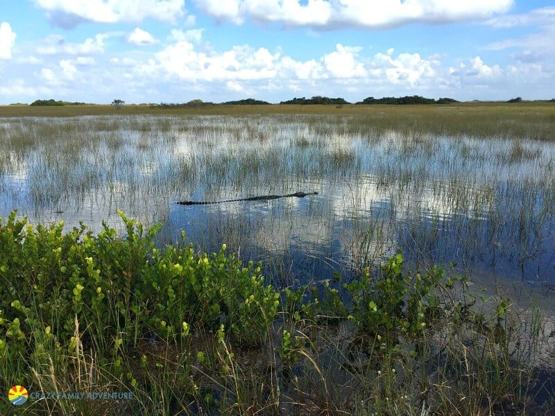 Shark Valley, Everglades National Park - One of the best places to visit in Florida