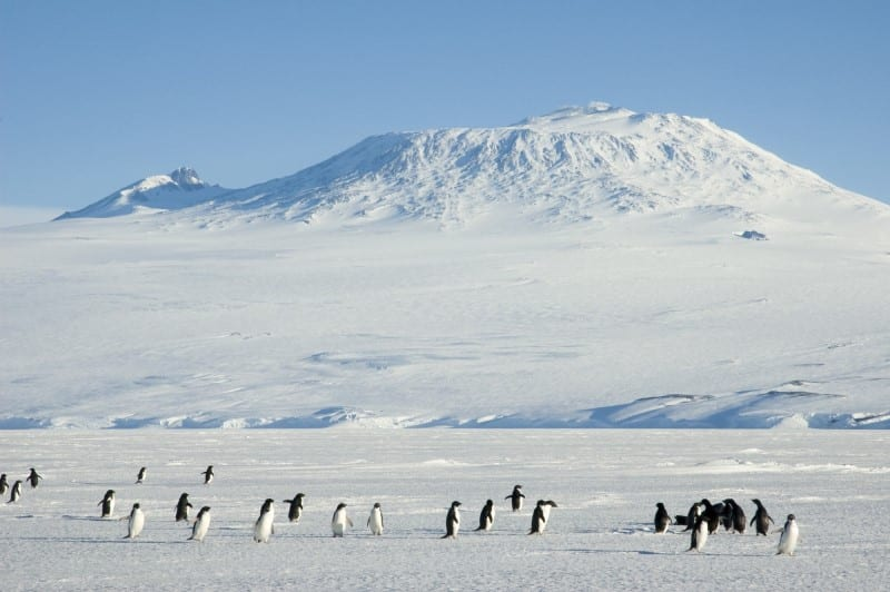 Campbell Island - Mount Erebus, Ross Island Ross Sea, Antarctica