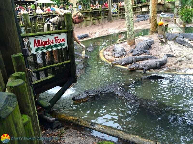 St Augustine alligator farm - one of the best places to visit in Florida