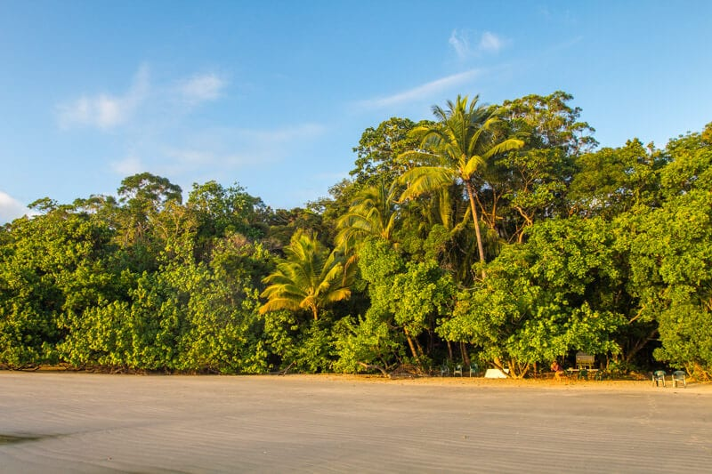 Highlights of a trip to the Daintree Rainforest in Queensland, Australia
