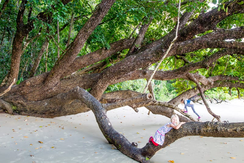 Cape Tribulation Beach - Raintree Rainforest, Queensland, Australia