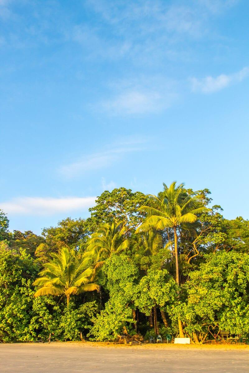 Morning light at Cape Tribulation Beach in the Daintree Rainforest of Queensland, Australia