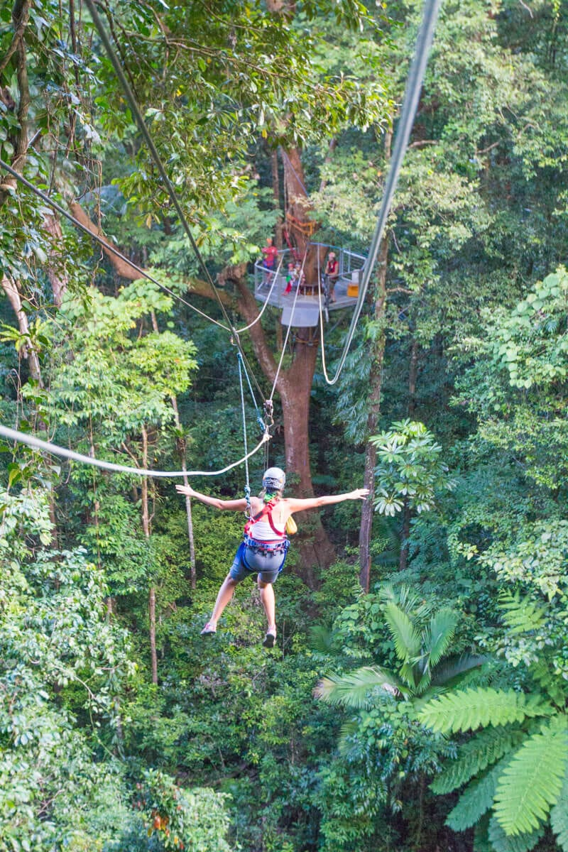 Jungle Surfing (zip lining) in the Daintree Rainforest of Queensland, Australia