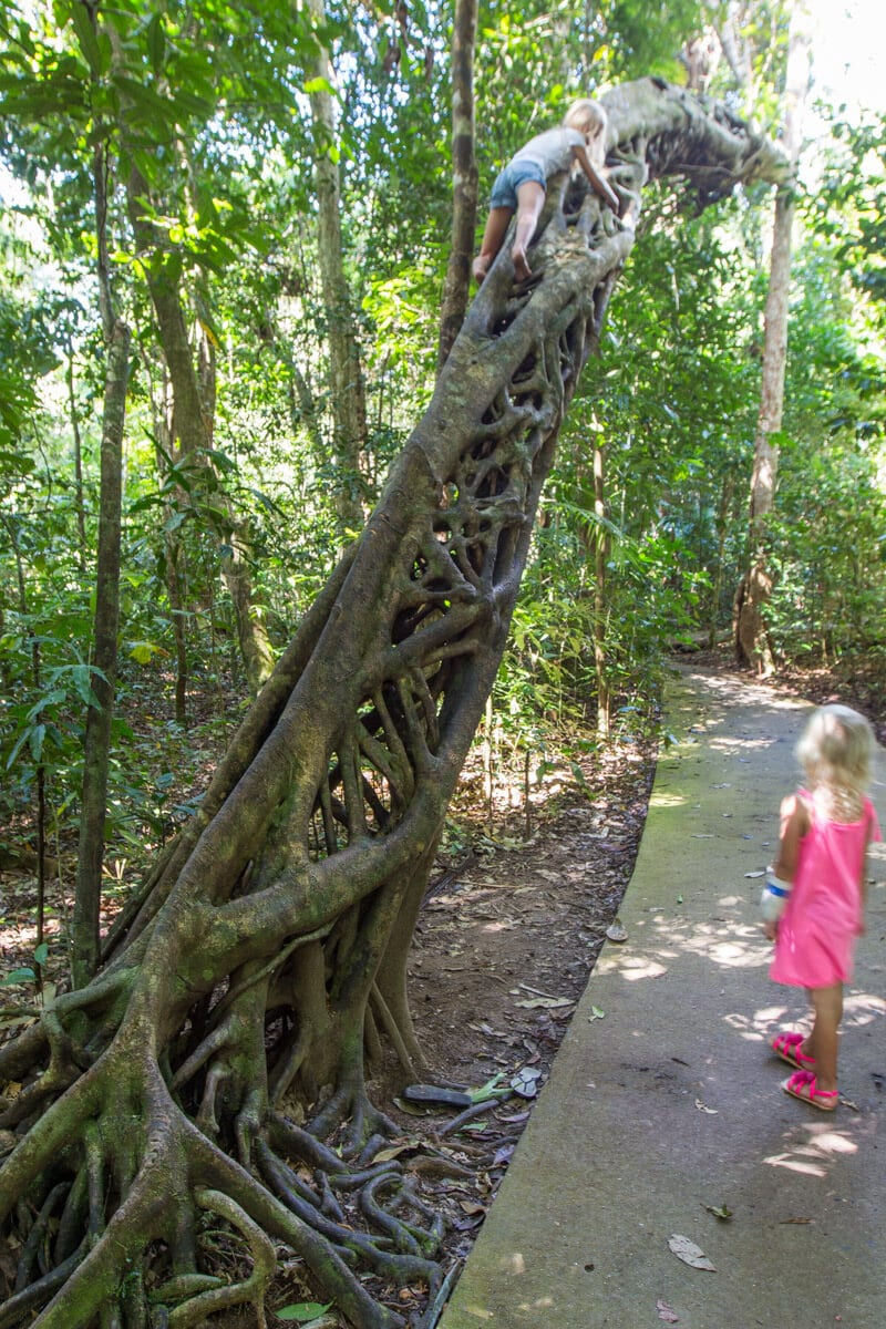 Marrja Boardwalk - Daintree Rainforest, Queensland, Australia