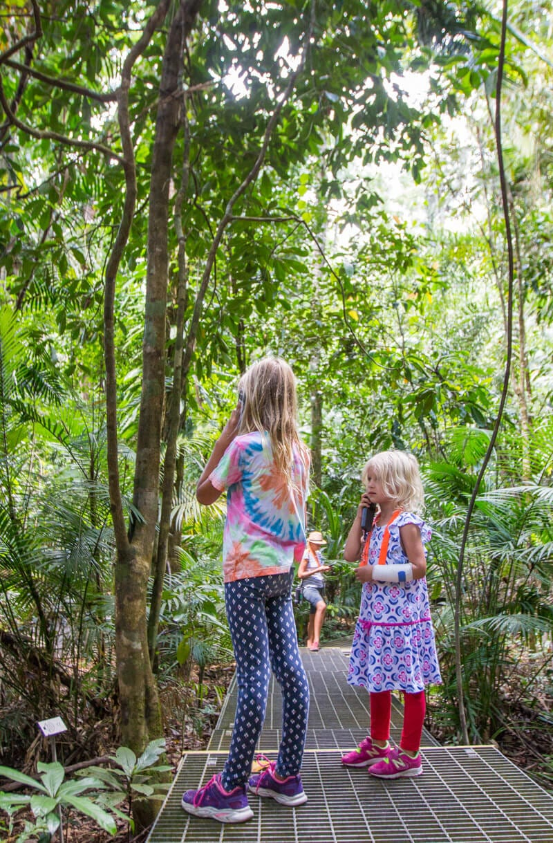 Learn about the Daintree Rainforest at the Daintree Discovery Centre