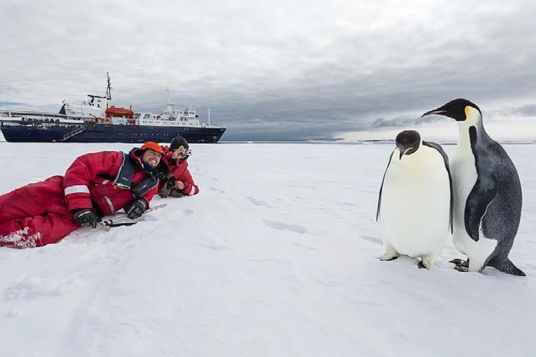 Emporer Penguins Antarctica