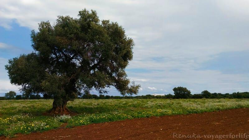 Countryside Puglia Italy
