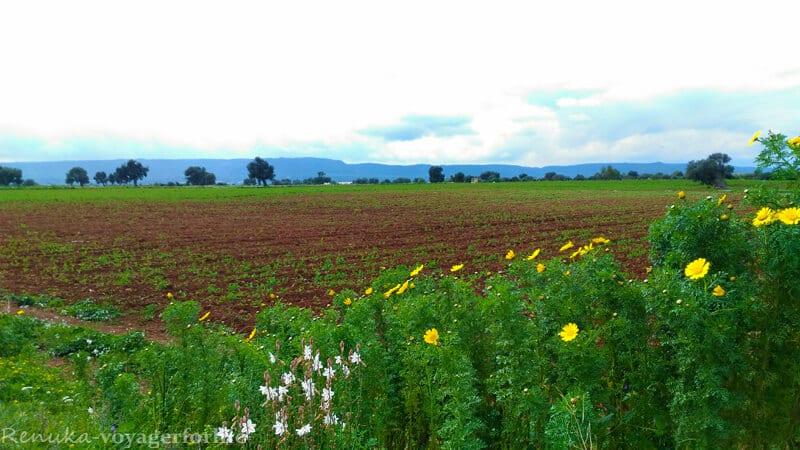 rural land puglia italy