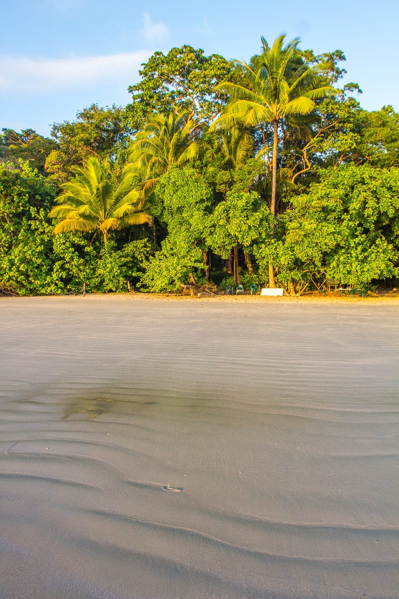 Cape Tribulation Beach in the Daintree Rainforest of Australia