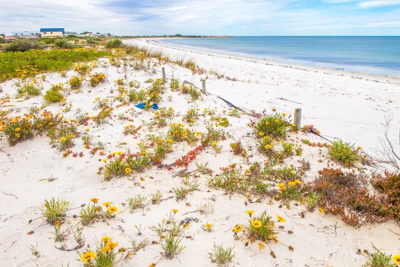 Arno Bay on the East Coast of the Eyre Peninsula is a good stopover on your road trip with kids in South Australia. Click to read more tips on things to do on the Eyre Peninsula